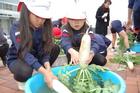(動)ダイコンの収穫~3年生社会