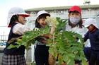 野菜の収穫・調理~2年生活