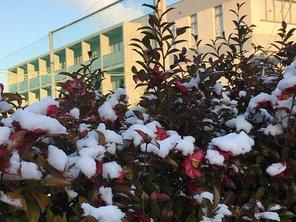 岐阜市内は積雪2㎝