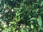 暑さの中でも元気な植物