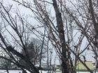 寒咲きの桜