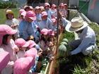 年中組 スイカの収穫