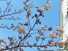 園庭に春がきた!