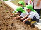 年少組 野菜の苗植え